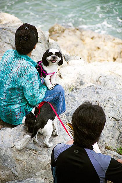 Korean Dog