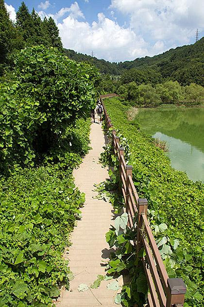 Hoedong-Lake-Busan