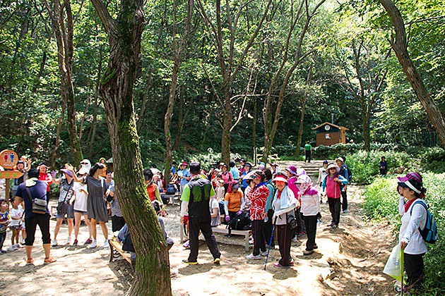 Mass Hiking in Busan