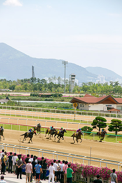 Horse Race Track in Busan