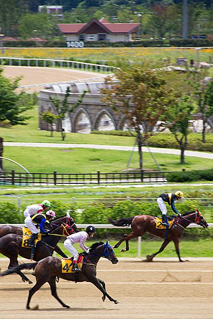 Horse Race Busan